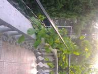 Сдается посуточно коттедж в Партените. 0 м кв. ул.Строительная